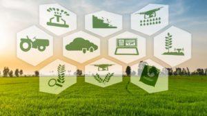 rolnictwo, aspekty rolnictwa, pole, gospodarstwo