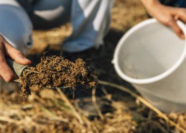 badanie, uprawy, samodzielne wykonanie prób, gleba