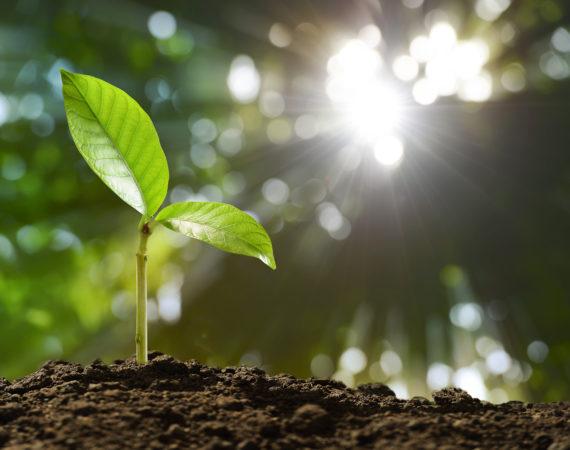 roślina, gleba, podlewanie opryski