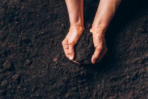 gleba, ziemia, zdrowie gleby, rolnictwo