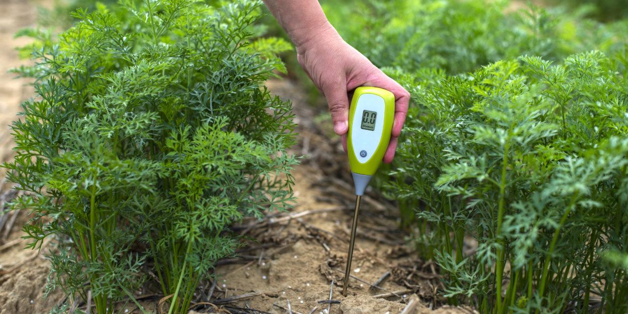 badania, badania gleby, pietruszka, blog