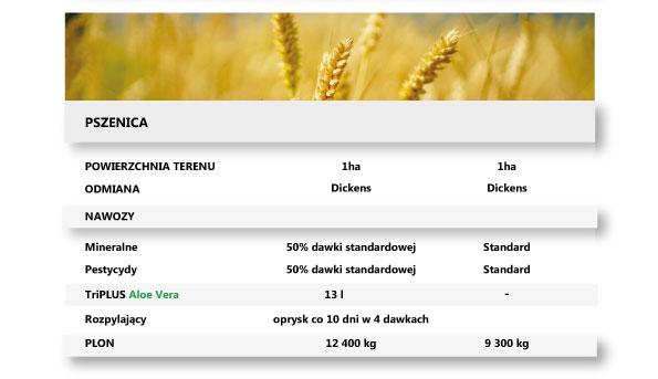 pszenica, porównanie, zysk, plon