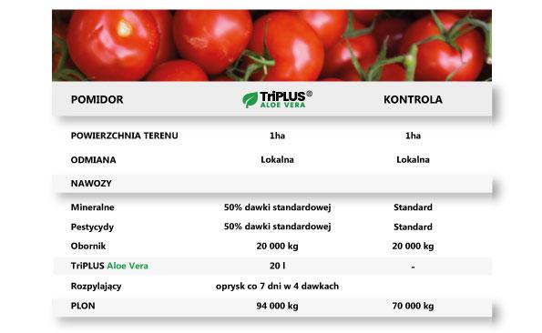 pomidor, uprawy, zysk, plon