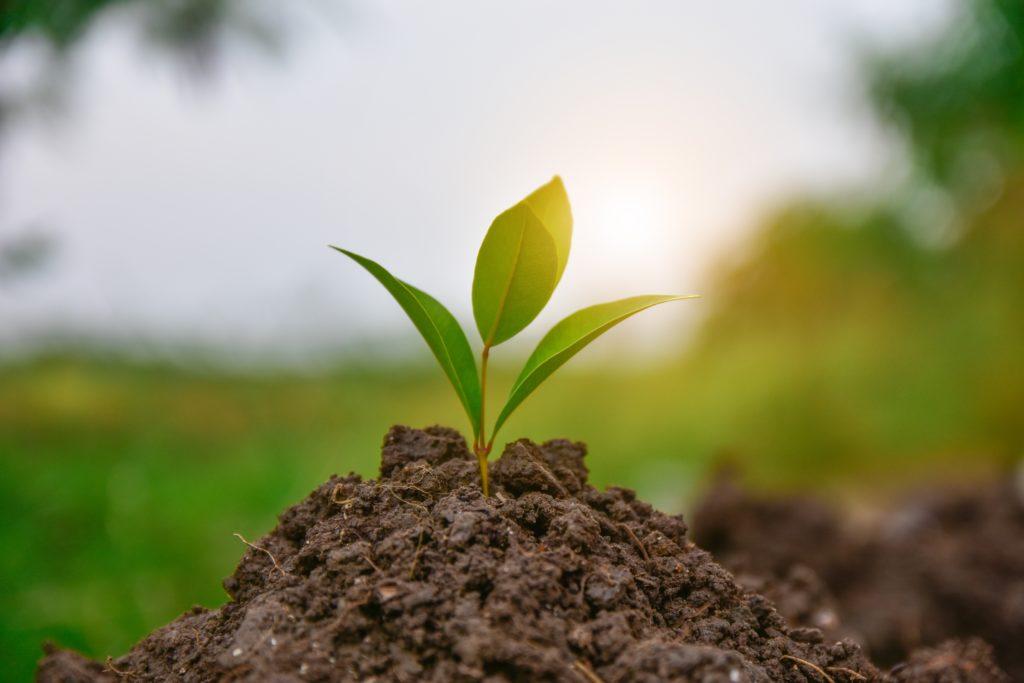 roślina, gleba, rolnictwo, uprawy