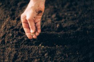 gleba, blog, dotacje, siew