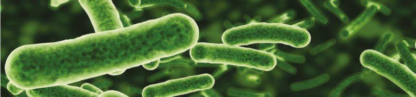 Bakterie, nawóz, rolnictwo