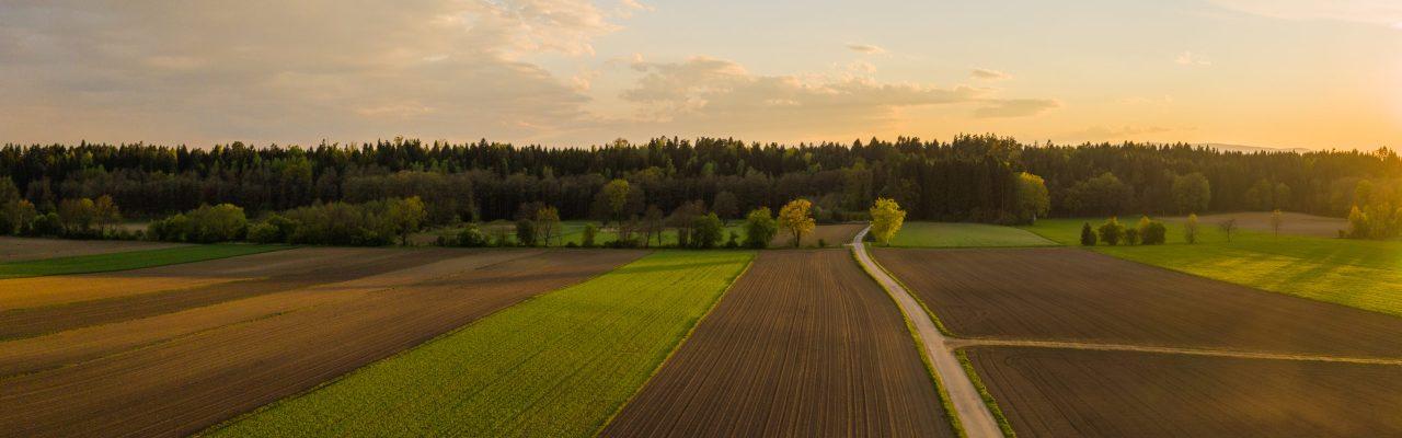 uprawy, pole, rolnictwo